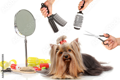 Yorkshire terrier grooming at the salon for dogs - 76030414