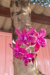 the violet lotus under the sun light