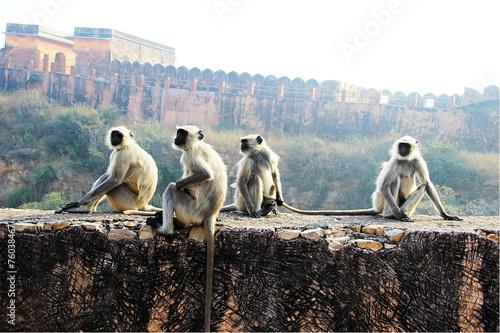 Plakat Monkeys on the Wall
