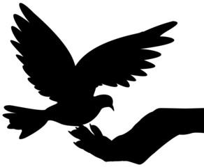 colombe posée dans main féminine ouverte