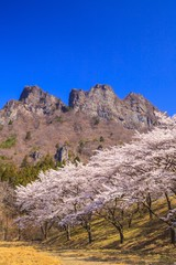 Cherry tree and Mt. Myogi in spring