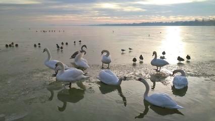Birds on the ice