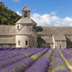 Abbey of Senanque and lavander field