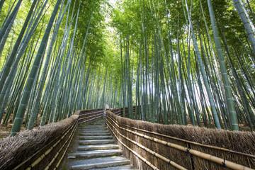 Bamboo forest walkway near adashinonenbutsuji temple, Kyoto