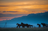 Beautiful bay horse herd grazes in the mountains at sunset