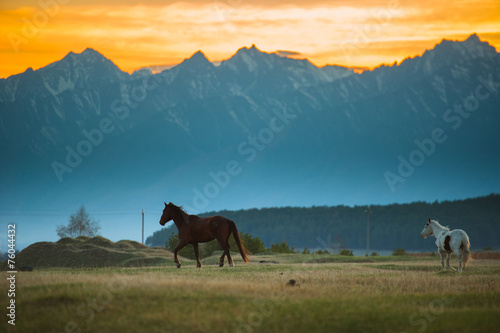 Beautiful bay horse herd grazes in the mountains at sunset © irimeiff