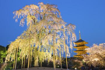 To-ji pagoda with cherry blossom tree at night, Kyoto