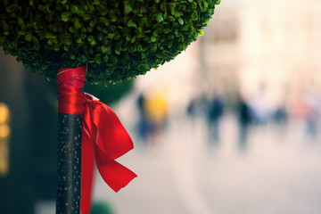 Ornamental tree with a red bow on the street