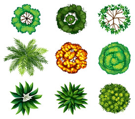 A group of plants