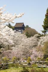 Yoshinoyama, Japan. Cherry blossom season during the spring.