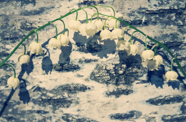 Background with lilies of the valley on a birch bark