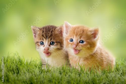 zwei Katzenbabys - 76049021