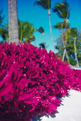tropical pink colorful background
