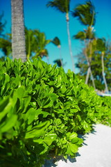tropical green colorful background