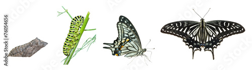 Tuinposter Vlinder Stages of butterfly 4