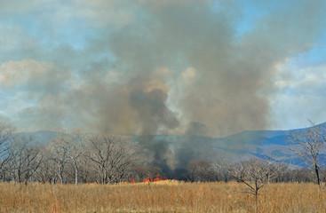 Brushfire 24