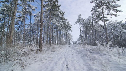 Walking in snow through the forest POV