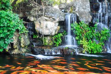beautiful koi fish in water fall