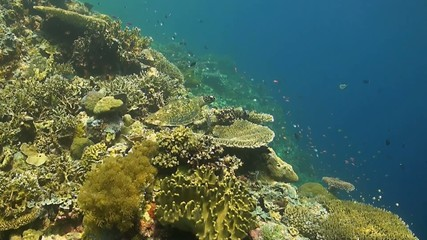 Hawksbill turtle is sitting on a coral reef