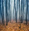 Leinwanddruck Bild - Buchenwald im Herbst