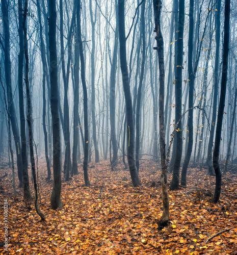 Leinwanddruck Bild Buchenwald im Herbst