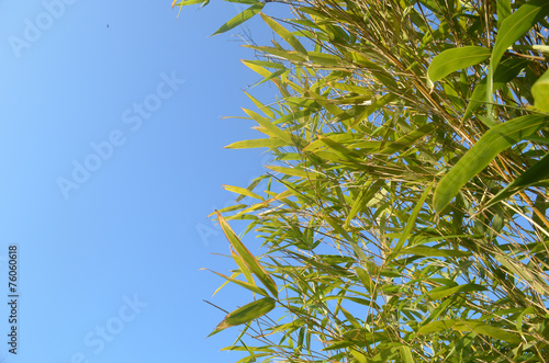 Poster Bamboe Leaves of bamboo against blue sky