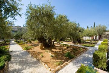 Garden of Gethsemane