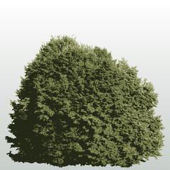 big bush