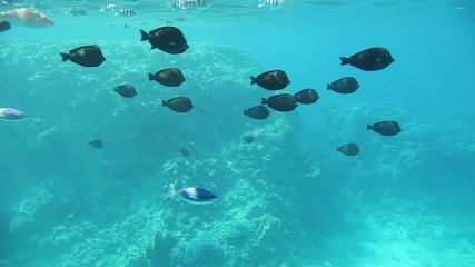 Underwater footage of various fish swimming in tropical waters