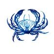 crab sketch. - 76066830