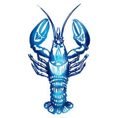 Vector lobster sketch.