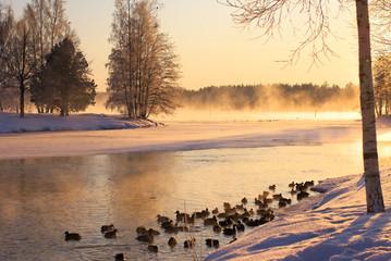 Ducks on the winter lake