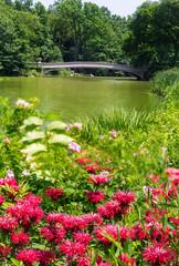 Central Park The Lake Bow Bridge New York
