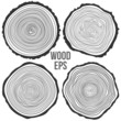 Vector tree rings background and saw cut tree trunk - 76069894