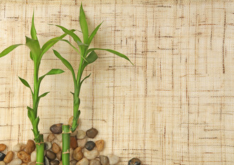 bambou et cailloux sur fond de toile de jute