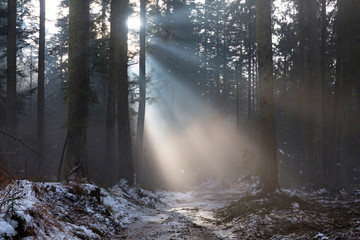 Sunbeams in misty forest at winter time