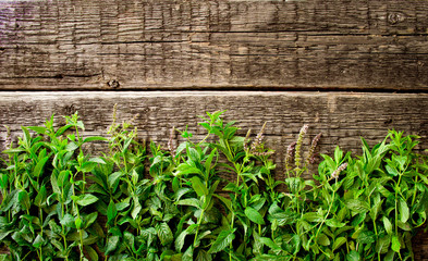 Fresh  mint leaves on  wood background