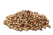 Heap of hemp seeds - 76072090