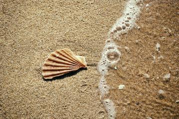 Concha en playa