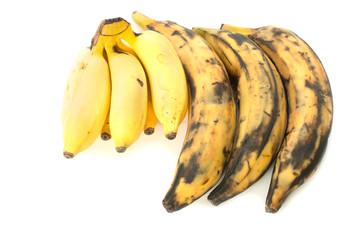 Three plantain bananas versus regular on white background
