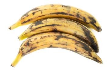 Three plantain bananas on white background