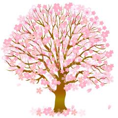 桜 花 春