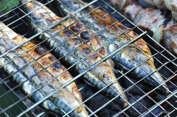 Mackerel fish on grill and hot coals, DOF