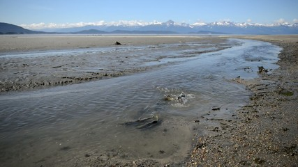 Migrating salmon in river with mountain backdrop, Alaska