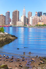 Manhattan New York skyline East River with ducks