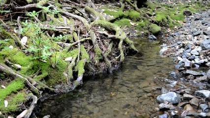 Gentle flowing water in stream in forest
