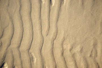 Background of the sand