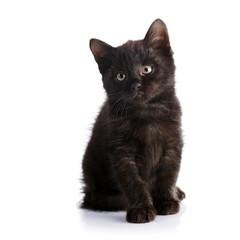 Small black kitten.
