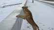 Постер, плакат: Dog standing with front paws on concrete parapet