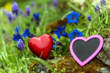 Zwei Herzen in altem Steingarten mit Enzian und Traubenhyazinthe